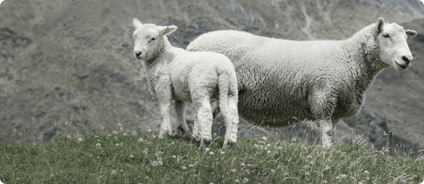 About The Wool